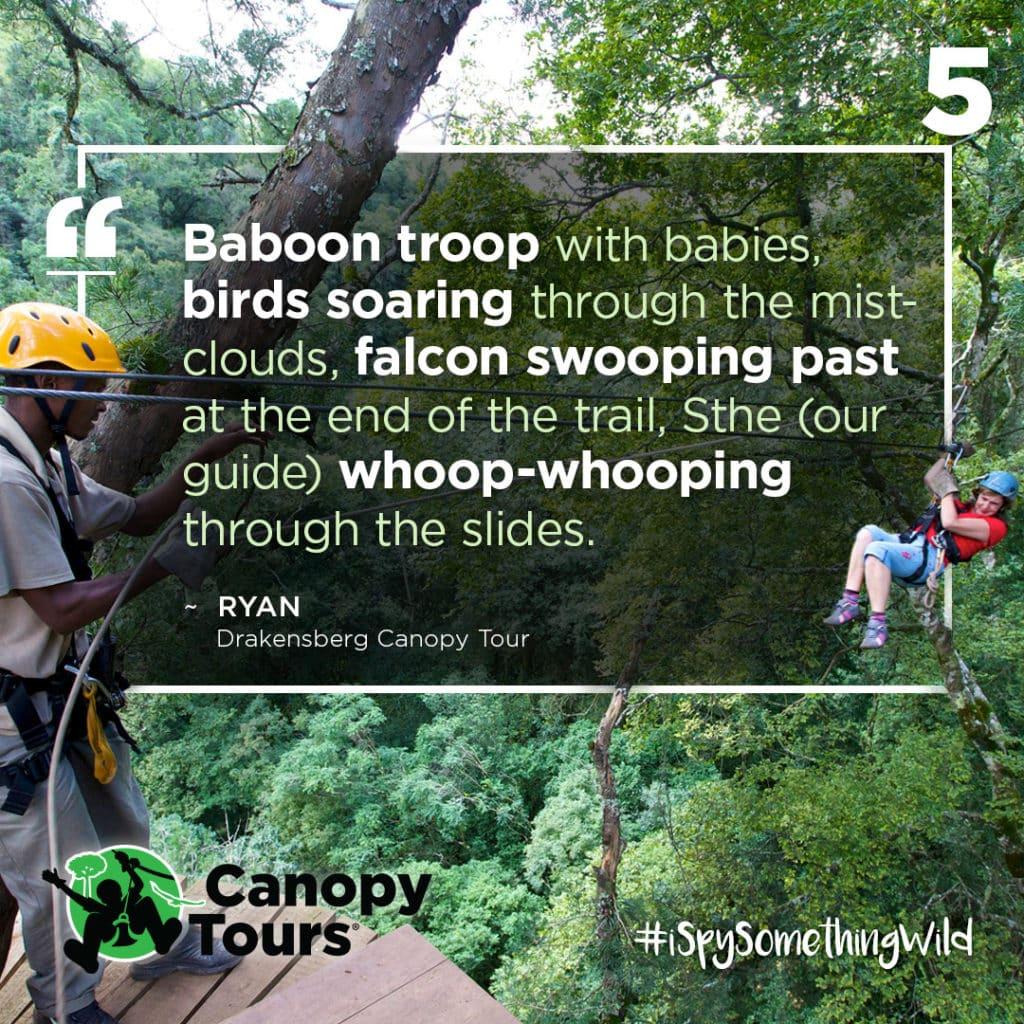 #5 Drakensberg Canopy Tour