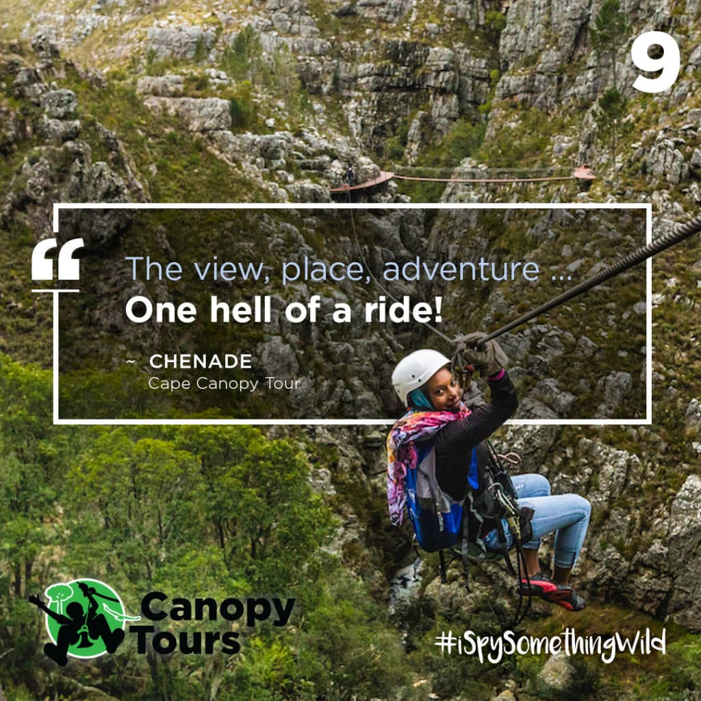 #9 Cape Canopy Tour
