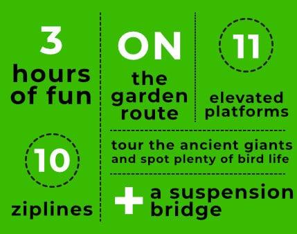 Tsitsikamma Canopy Tours Infographic
